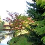 Beauty of Trees, Weeping Willows & Maples