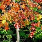 Fall foliage_2005