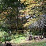 Tree Linned