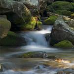 Betty's Creek