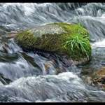 Mountain Stream with Boulder