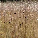 Field in October