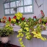 Window Box with Flowers