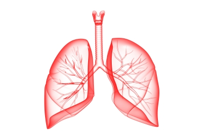 lungs - respiratory illness